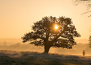 © Licensed to London News Pictures. 06/11/2014. Richmond, UK. Sunrise over Richmond Park.  People and animals during a frosty start to the day on 6th November 2014. Temperature fell across the country overnight. Photo credit : Stephen Simpson/LNP