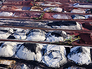 Nederland, Zuid-Holland, Rotterdam, 14-09-2019; Eerste Maasvlakte (MV2), Mississippihaven met EMO, logistieke terminal voor droge bulklading - overslag van droge bulk, zoals erts en kolen.<br /> Mississippihaven with EMO (transshipment of dry bulk, such as ore and coal).<br /> <br /> luchtfoto (toeslag op standard tarieven);<br /> aerial photo (additional fee required);<br /> copyright foto/photo Siebe Swart