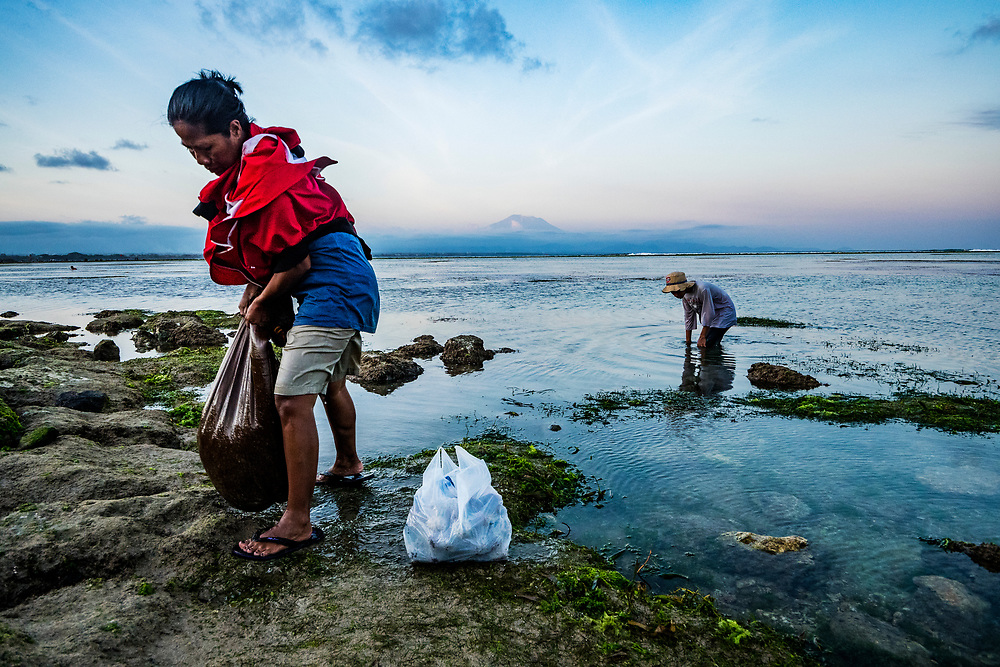 A mother and son search for sea urchins in the seagrass beds at low tide in Bali, Indonesia.