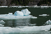 Small ice bergs known as bergy bits float in LeConte Bay near the LeConte Glacier in Petersburg Island, Alaska. The icebergs calve off the nearby LeConte Glacier which is the southernmost tidewater glacier of the Northern Hemisphere.