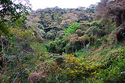 Africa, Tanzania, Lake Manyara National Park landscape