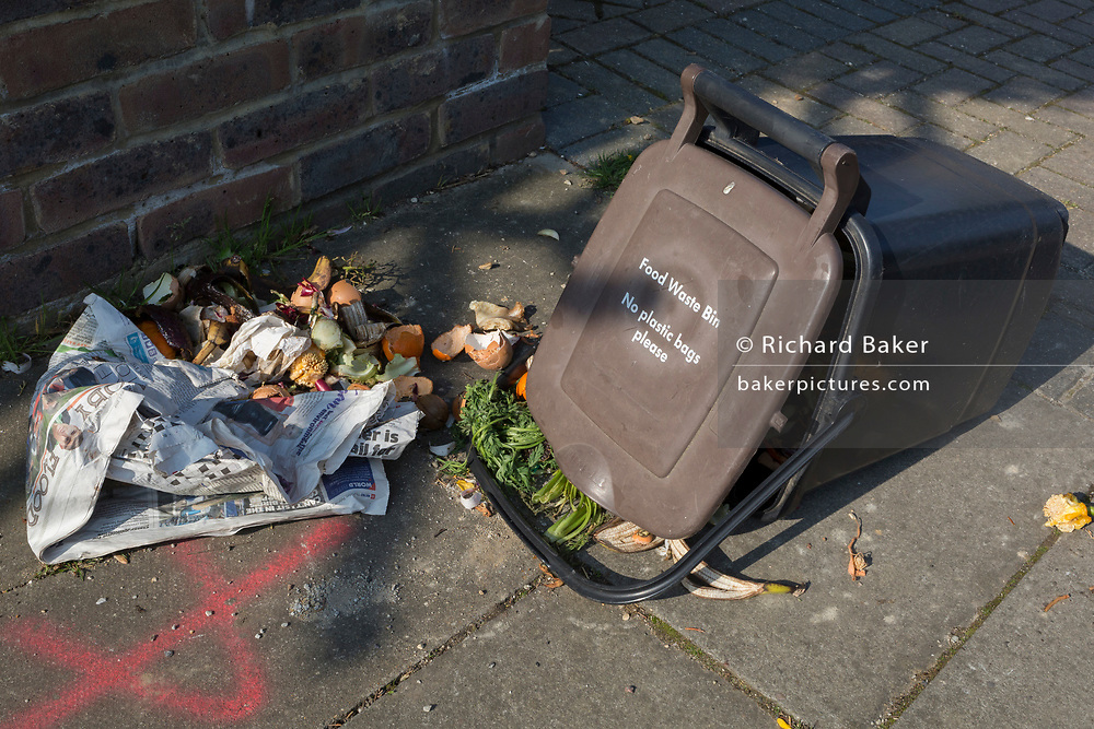 The mess left by an urban red fox which has learned to open a domestic food bin on a residential street, on 15th April 2019, in London, England.