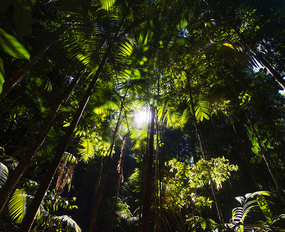Sunlight penetrates through the canopy and reaching the forest floor of the Amazon rainforest, Brazil.