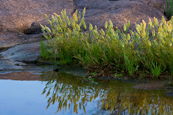 Stock photo of vegetation growing along the bank of the Llano River in the Texas Hill Country