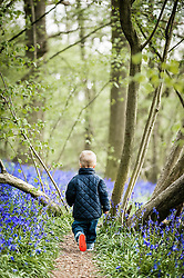 A young boy sets off on an adventure to see a spectacular display of bluebells for the first time.