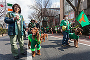 """Irish Setters and their owners at the 27th Saint .Patrick's Day Parade in Omotesando, Tokyo, Japan. Sunday March 17th 2019. Started in 1992 by the Irish Network, Japan, and supported by the Embassy of Ireland,; the parade, along with the """"I Love Ireland Festival"""" held nearby is Asia's  largest Irish event."""