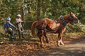Logging for habitat restoration