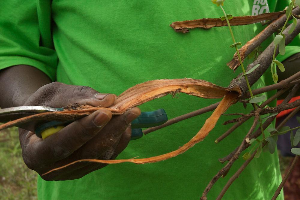 Medicinal plant root sample 2
