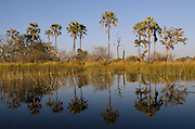 Flood Waters<br /> Moremi Game Reserve, Okavango Delta<br /> BOTSWANA