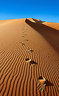 Foot steps in the Sahara sand dunes of erg Chebbi, Morocco, Africa .<br /> <br /> Visit our MOROCCO HISTORIC PLAXES PHOTO COLLECTIONS for more   photos  to download or buy as prints https://funkystock.photoshelter.com/gallery-collection/Morocco-Pictures-Photos-and-Images/C0000ds6t1_cvhPo