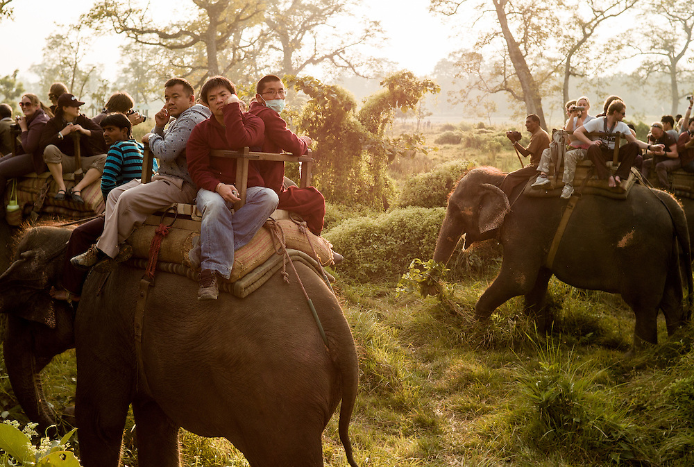 Tourists ride a late afternoon elephant safari in the Chitwan park buffer zone. Sold as the best way of seeing rhino and the elusive tiger, the safaris usually involve a mass of elephants departing at the same time. While rhino are seen, tigers are seldom spotted.