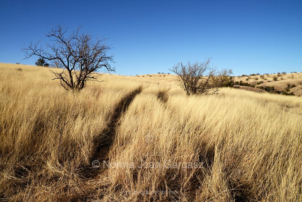 Grasslands along Gardner Canyon Road, north of Sonoita, Arizona, USA.