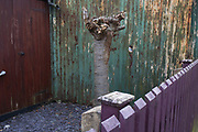 Strange urban landscape of a tree, fence and wall in Birmingham, England, United Kingdom.