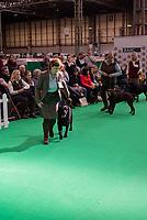 Crufts 2020 held at the NEC Birmingham.photo mark anton smith