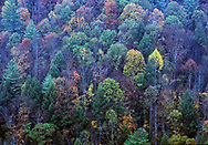 Fall colors in Jenny Wiley State Park near Prestonsburg, KY.