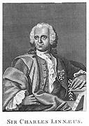 Linnaeus  (Carl von Linne - 1707-1778) Swedish naturalist, holding a sprig of Linnea borealis. Engraving