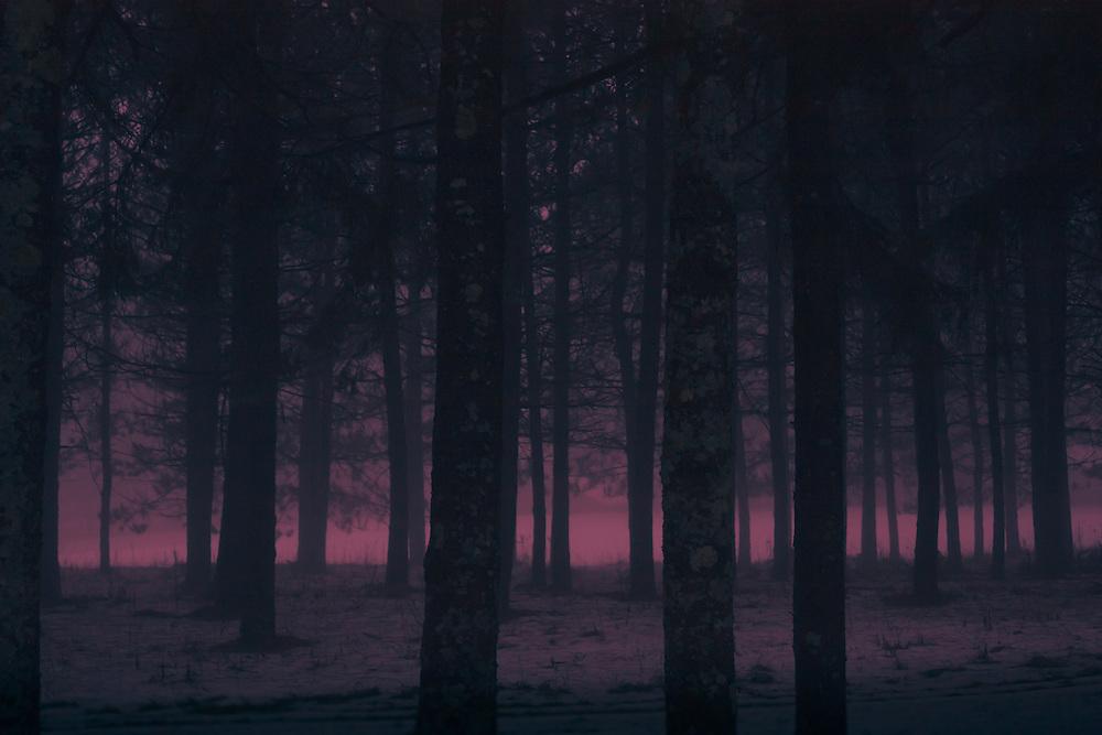 Evening in winter woods, twilight glow.