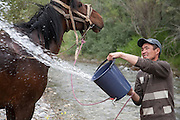 Man washes a horse by the Kurtka river, Kyrgyzstan