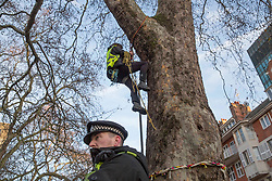 © Licensed to London News Pictures.31/01/2021, London,UK. A protestor climbs a tree while the eviction of HS2 Rebellion group from Euston Square Gardens in central London began four days ago and continues today. Eco-activists are living in increasingly unstable tunnels beneath the square. Photo credit: Marcin Nowak/LNP