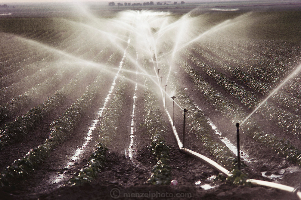 Irrigation: Sprinkler irrigation of agricultural crops in Los Banos, California. USA.