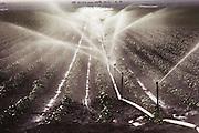 Irrigation: Sprinkler irrigation of agricultural crops in Los Banos, California. USA.