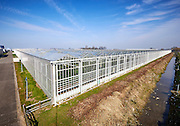 Tuinbouw, kassen in Zuid Holland  -  Horticulture, greenhouses in the Netherlands.