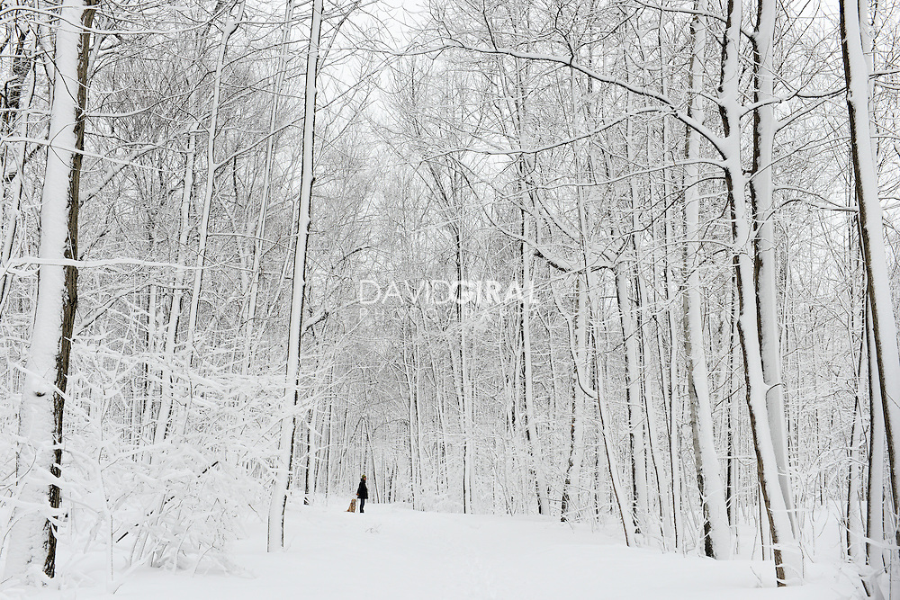 A man and his dog, Snow covered Mont Royal Park in Winter, Parc du Mont Royal, Montreal, Quebec, Canada
