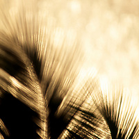 Graphic silhouettes of Palm fronds with reflective ocean out of focus in the background