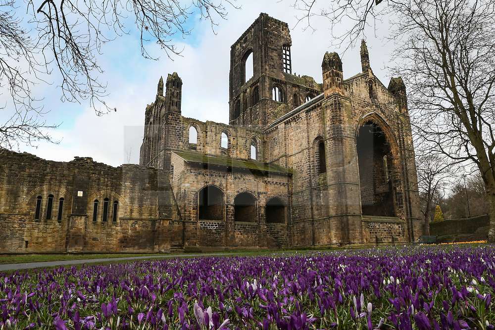 © Licensed to London News Pictures. 01/03/2017. Leeds, UK. Colourful crocuses are in bloom on the first day of spring at Kirkstall Abbey in Leeds, West Yorkshire. Despite spring being on the way weather experts are predicting more cold weather and snow later this week. Photo credit : Ian Hinchliffe/LNP