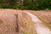 Mound Meadow Trail, Point Lobos State Reserve, Carmel, California
