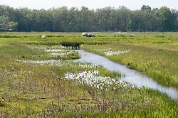 Lagieskamp, Naardermeer, Natuurmonumenten, Noord Holland, Netherlands