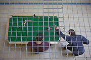 Prisoners play pool and chat during recreation on C wing in YOI Aylesbury.