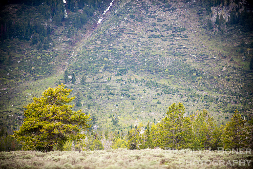 A few hundred yards of the Teton Fault are visibleas a light, horizantal line at the base of Rockchuck Peak south of Mt. Moran in Grand Teton National Park.