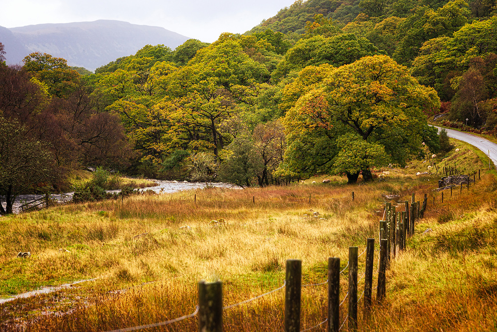 Sheep graze on the banks of the Abhainn a' Ghlinne Ghil (I knew you'd want to know the burn's name) presenting a beucolic scene with ineffective fencing and mist covered mountains.