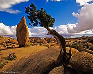 Balanced Rock and  Juniper Tree in  Joshua Tree National Park in California