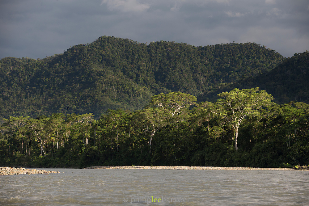 The riverbank seen from the Alto Madre de Dios River (High mother of god) in Manu National Park, Peru, South America