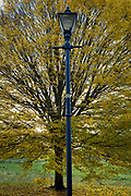 An autumn tree and Edwardian lamp post in Ruskin Park, on 12th November 2018, in Southwark, London, England.