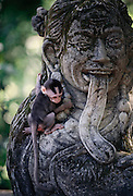 A young monkey clings to a stone sculpture at a temple in the monkey forest near Ubud, Bali, Indonesia.