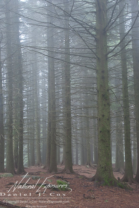Fog shrouds the forest in the mountains just outside of Bergen, Norway.