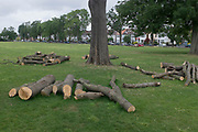 After tree surgeons severed the branches from a 100 year-old but diseased ash tree, the remaining logs lie on the ground in Ruskin Park, Lambeth, on 30th June 2020, in London, England.