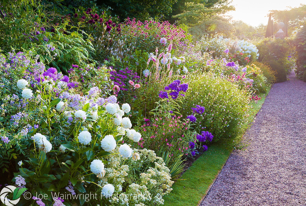 The main perennial border at Wollerton Old Hall Garden, Shropshire, photographed in early morning, in July This image is available for sale for editorial purposes, please contact me for more information.