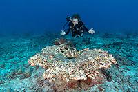 Sylvia Examining Reef Seychelles 3