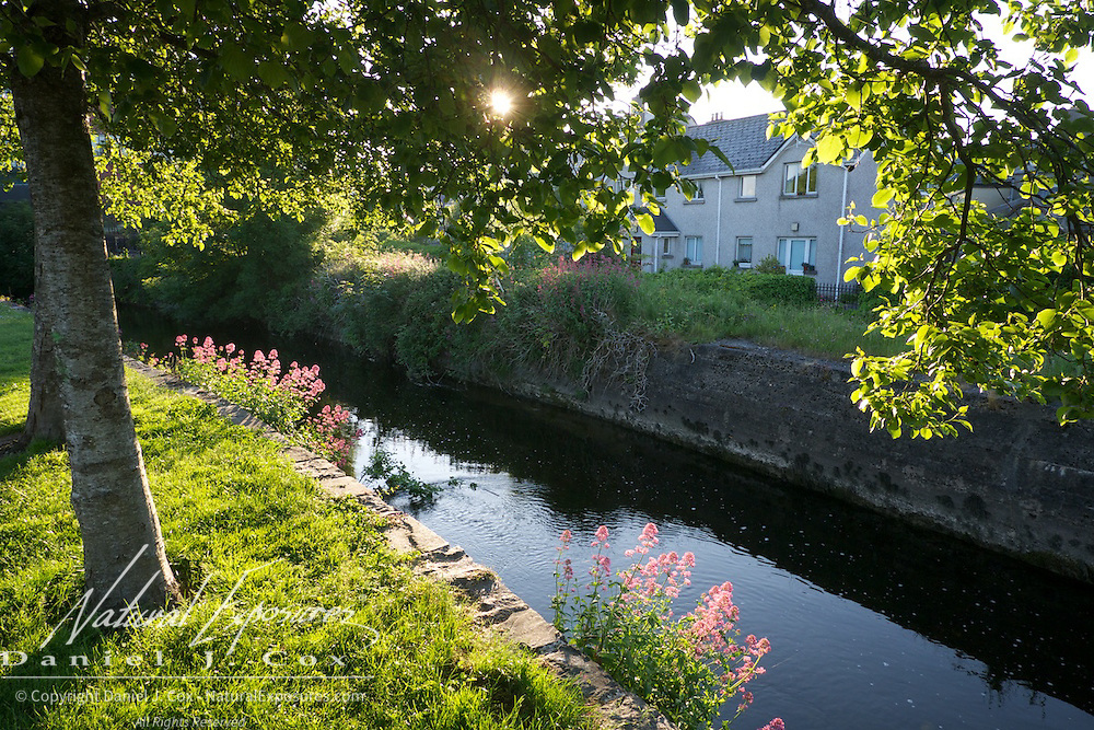 Warm morning sun peaks through the leaves of a tree along a waterway in Galway, Ireland.