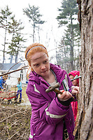 Tree Tapping for Maple Sugar Season with the Herrmann family.  Karen Bobotas for the Laconia Daily Sun