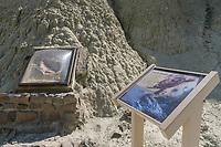Tortoise fossil, Blue Hills, Sheep Rock Unit, John Day Fossil Beds National Monument Oregon