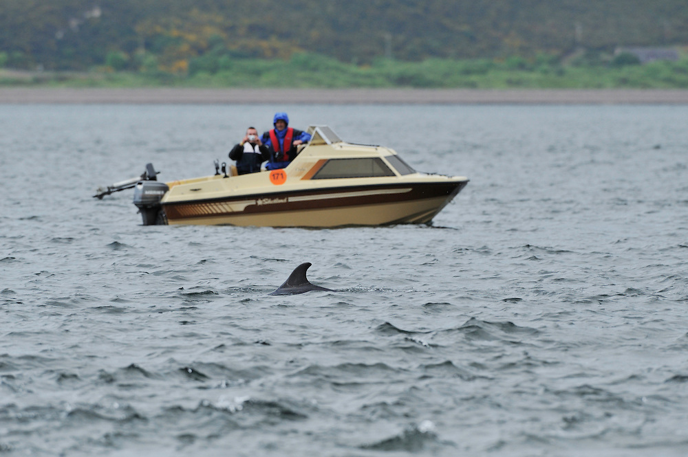 Boat owners watching Bottle-nosed Dolphin,<br /> Tursiops truncatus,<br /> Moray Firth, Nr Inverness, Scotland - June