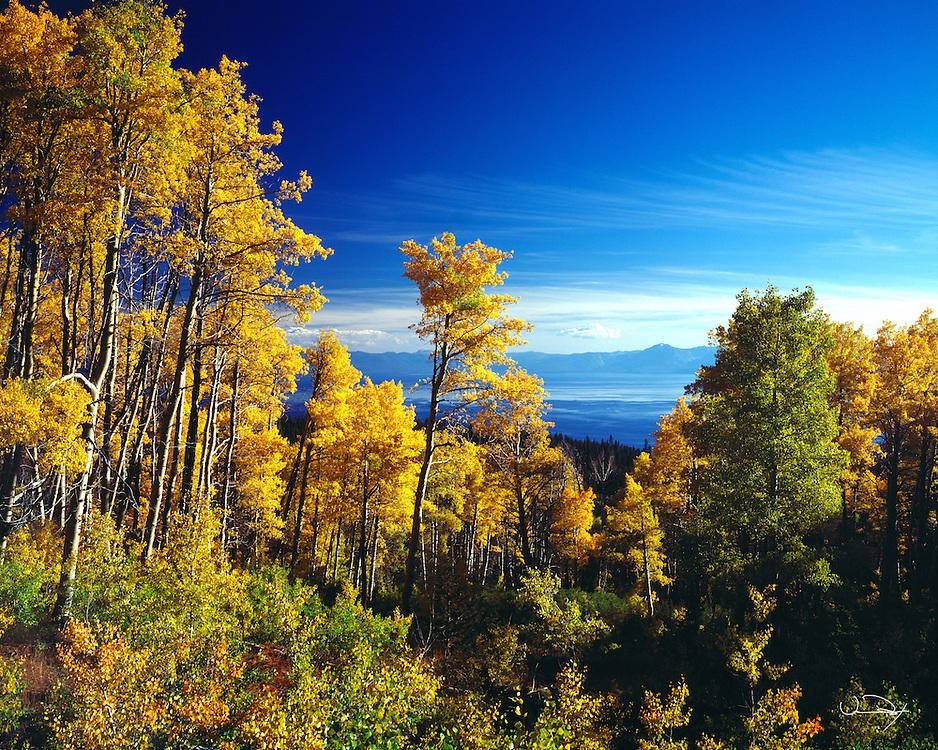 Lake Tahoe Scenic Fall Colors on Aspens Lake Tahoe