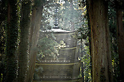 HAGURO, JAPAN Dewasanzan - five roof pagoda in a middle of the cedar tree and under a falling lignt. Auguts 2005 ***[FR]*** La pagode du sanctuaire shinto Dewasanzan au milieu des cedre et sous une lumière matinale.