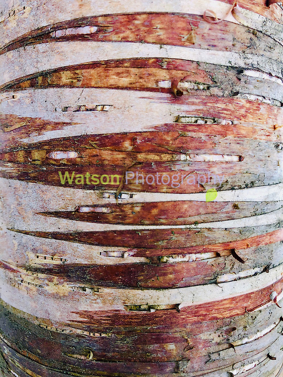 Birch by Nature's Design