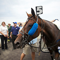 Hambletonian Day 2011 - Meadowlands
